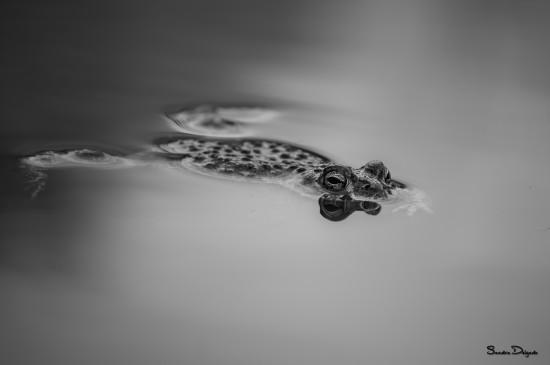 Individuo flotante