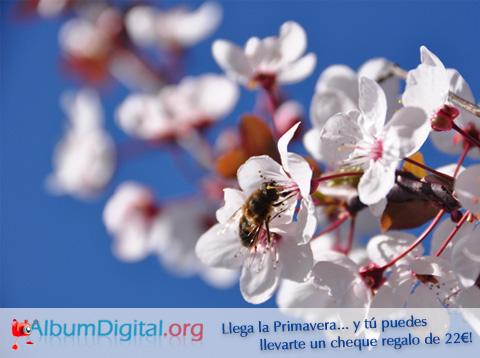 Concurso Primavera Album Digital Hofmann